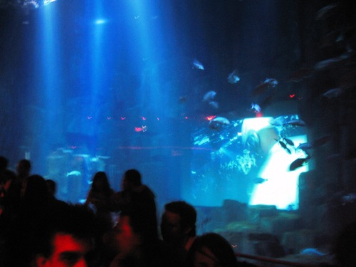 aquarium paris soirée disco